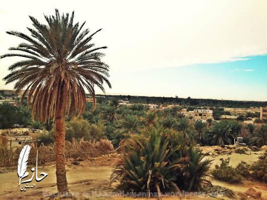 Overview Siwa Mountain of the Dead – Siwa – Western desert – Egypt  جبل الموتى – سيوة – الصحراء الغربية – مصر 0032-DSC_0135